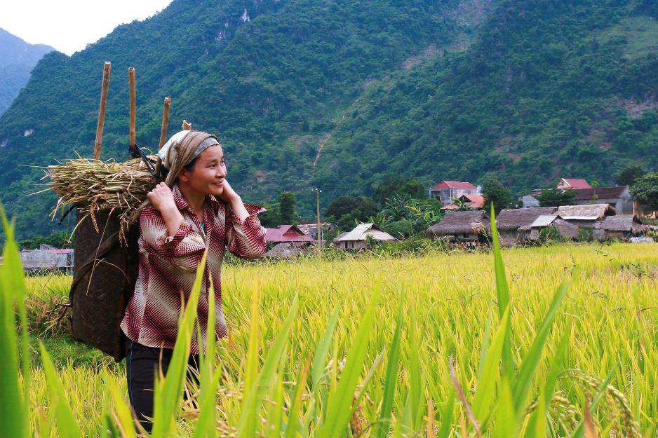 RESPONSIBLE LAND  INVESTMENT FOR  SUSTAINABLE FOOD  SYSTEMS: Taking stock of lessons from responsible land investment pilots, partnerships and platforms