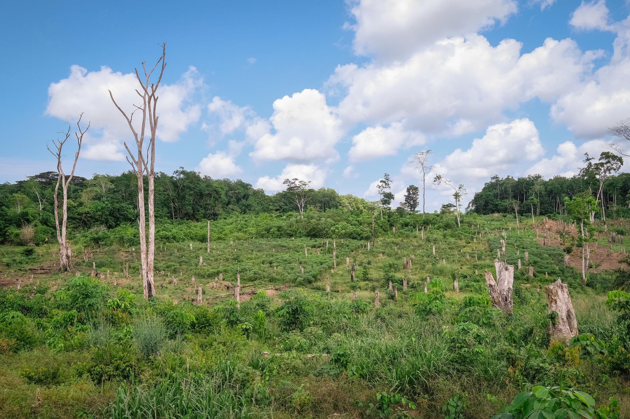 DRC agricultural land - land deals (CIFOR CC BY)