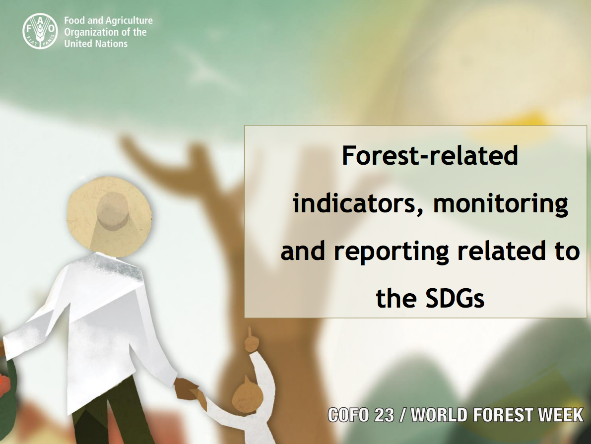 Forest-related indicators, monitoring and reporting related to the SDGs cover image
