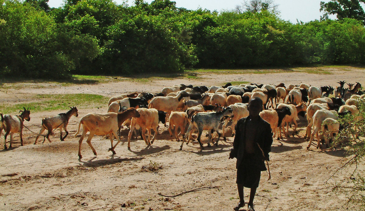 pastoralism.jpg