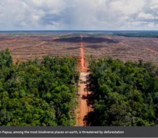 The burning scar: Inside the destruction of Asia's last rainforests