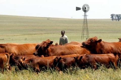 af-sud-reforme-agraire.jpg