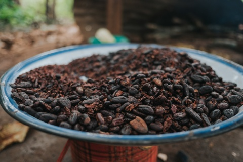 Land rights for cocoa farmers aren't just good stewardship, they're smart business
