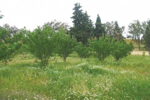 d-el-heranefa-lexploitation-agricole-chenouana-squattee-d7a52.jpg