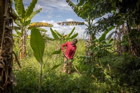 Man harvesting crops