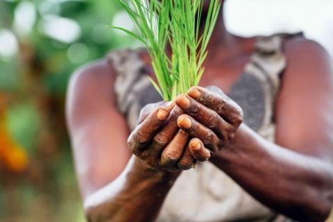 Quelques organisations de la société civile alertent les autorités congolaises sur la violation des droits des défenseurs environnementaux et fonciers.