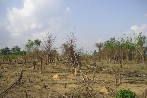 liberia agricultural landscape