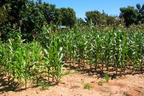Flickr Zimbabwe agricultural land