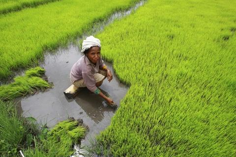 timor leste agriculture photo UN photos