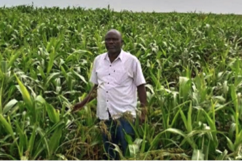 Commonalities between Ethiopian smallholder farmers and agricultural investors