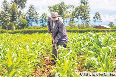 Farming is lucrative for young people