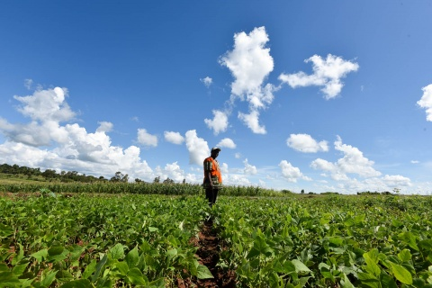 Mozambique agriculture CIAT.jpg