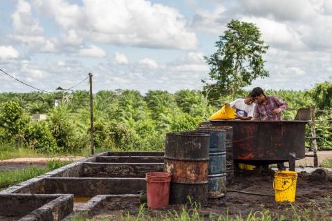 Palm oil CIFOR.jpg