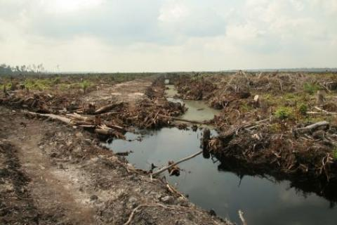 Land cleared for palm oil in Riau Province, Indonesia. Only half of Riau's palm oil plantations have official permits (Photo: Wakx, Creative Commons via Flickr)
