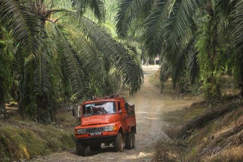 Palm Oil Truck