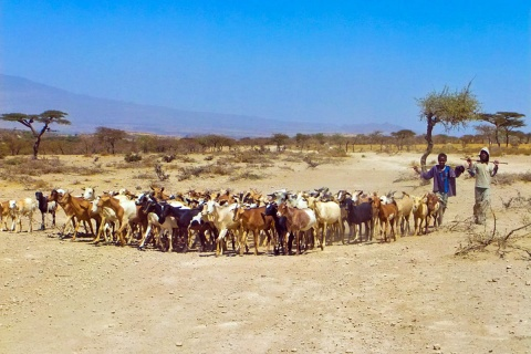 Boys and Cattle in Ethiopia, photo by Guush Berhane Tesfay/IFPRI,CC BY-NC-ND 2.0 license