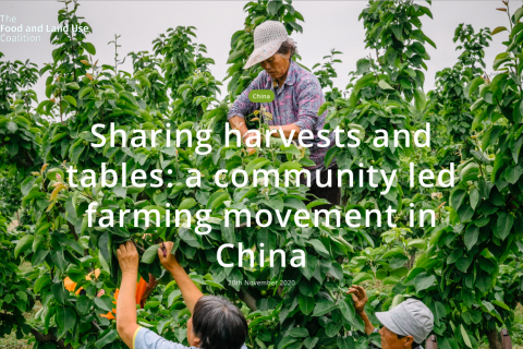 Sharing harvests and tables: a community led farming movement in China