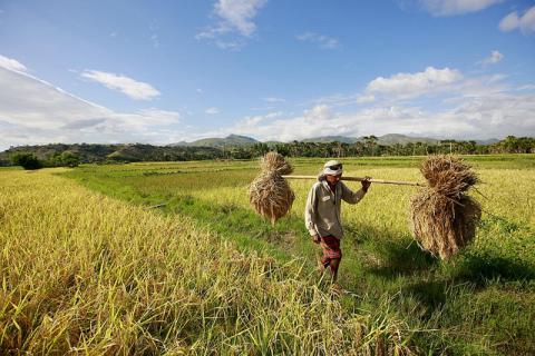 Farmer - Timor Leste