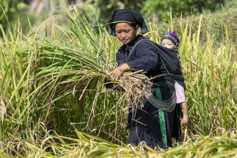 Thinh Hoang Hai