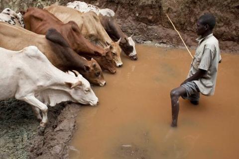 Un éleveur abreuve son troupeau dans un puits en cours de rénovation avec l'aide de la FAO et de l'UE à Higo, en Éthiopie