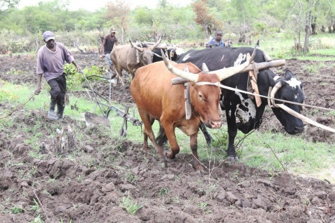 INE moves on with census to register farming companies José Cachiva