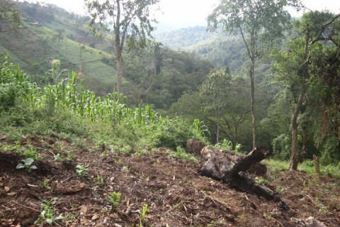 deforestation afrique.