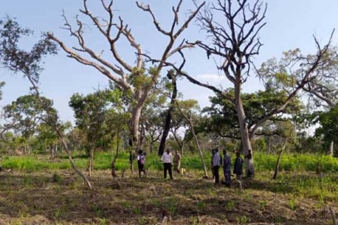 Police and NFA officials tour part of Mt Kei Central Forest Reserve, which was cleared for farming by the encroachers on Wednesday. PHOTO | RASHUL ADIDI