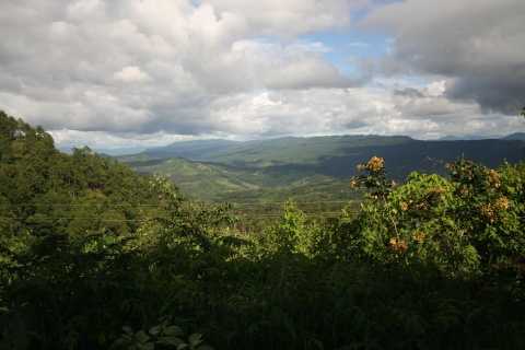 """""""Mexico's forest"""" by alkimista85 is licensed with CC BY-NC 2.0. To view a copy of this license, visi"""