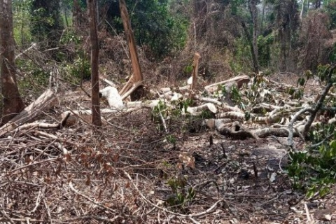 NEMA right to allow sugarcane growing on Bugoma Forest land- Court rules