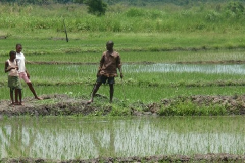 ZIMBABWE: State to resettle 180 farmers on irrigable land