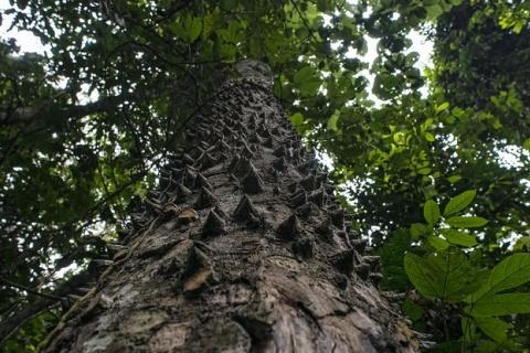 Forest Reserve near the Village of Masako, Kisangani, Democratic Republic of Congo. CIFOR/Ollivier Girard