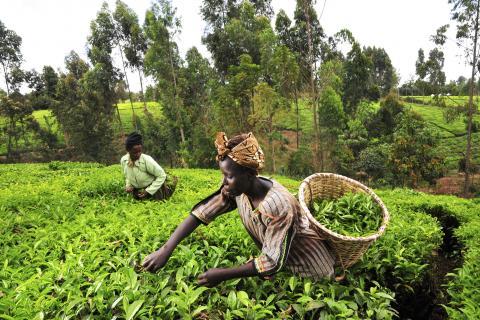 La Chine va créer des zones de démonstration agricole dans 10 pays.jpeg